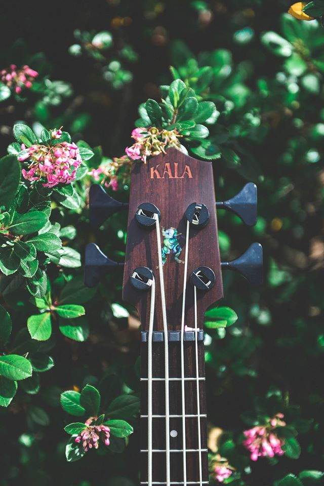 Mahogany uBass with metal roundwound strings.  Photo: Kala UBass Facebook Page.